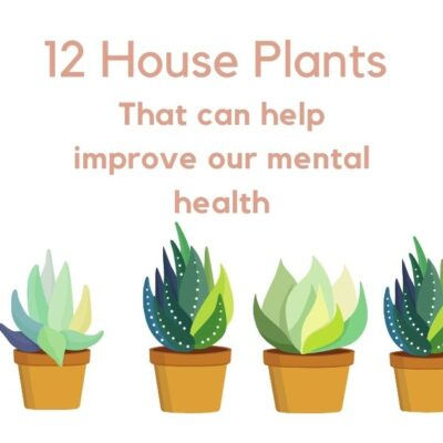12 House Plants that can improve your mental health